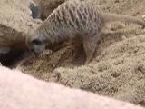 Суслики,) зоопарк в Николаеве